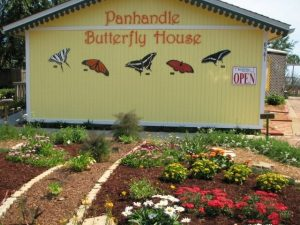 Panhandle Butterfly House near Fort Walton Beach